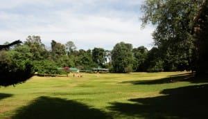 Kandy grounds