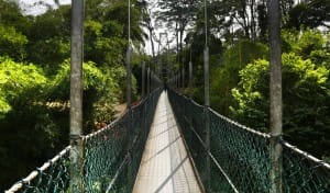 Suspension bridge at Kandy Sri Lanka