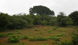 Foliage at Yala National Park