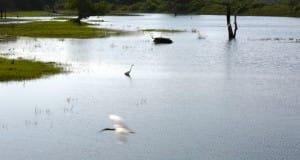 Water at Yala National Park