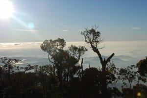 Treeline in World's End & Horton Plains National Park