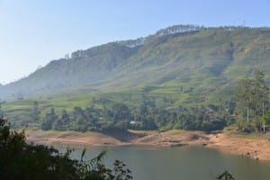View in Tea Country