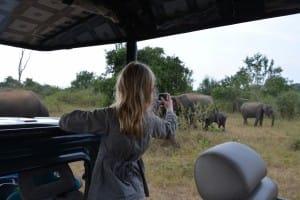 Safari day trip to Udawalawe National Park