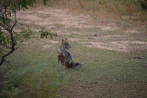 Animals at Yala National Park