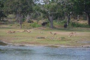 Wildlife at Yala National Park
