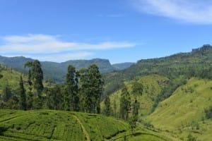 Tea country expanse