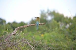 Wild bird, Bundala National Park