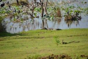 Nature reserve Bundala