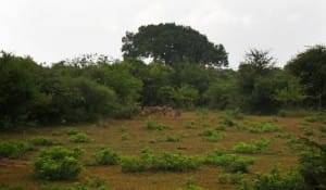 Foliage at Yala National Park