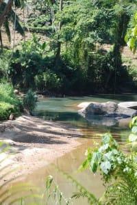 Inside Sinharaja Rain Forest