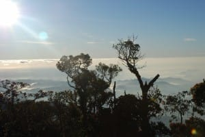 Treeline in World's End & Horton Plains National Park