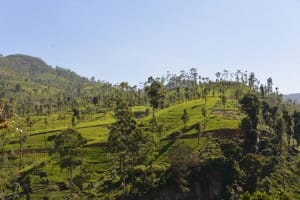 View of Sri Lanka Tea Country