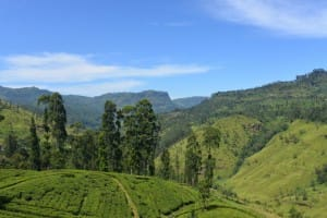 Tea country expanse
