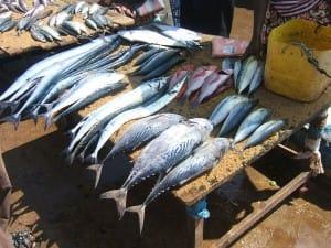 Locally caught fresh fish